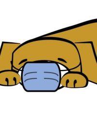 Lazy Dog Boracay